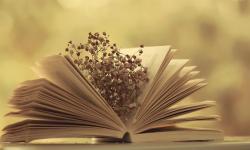 Chọn Lọc Những Quyển Sách Tham Khảo Ngữ Văn Lớp 8 Hay Và Mới Nhất 2018