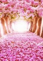 Tranh Vườn Hoa - TP5642